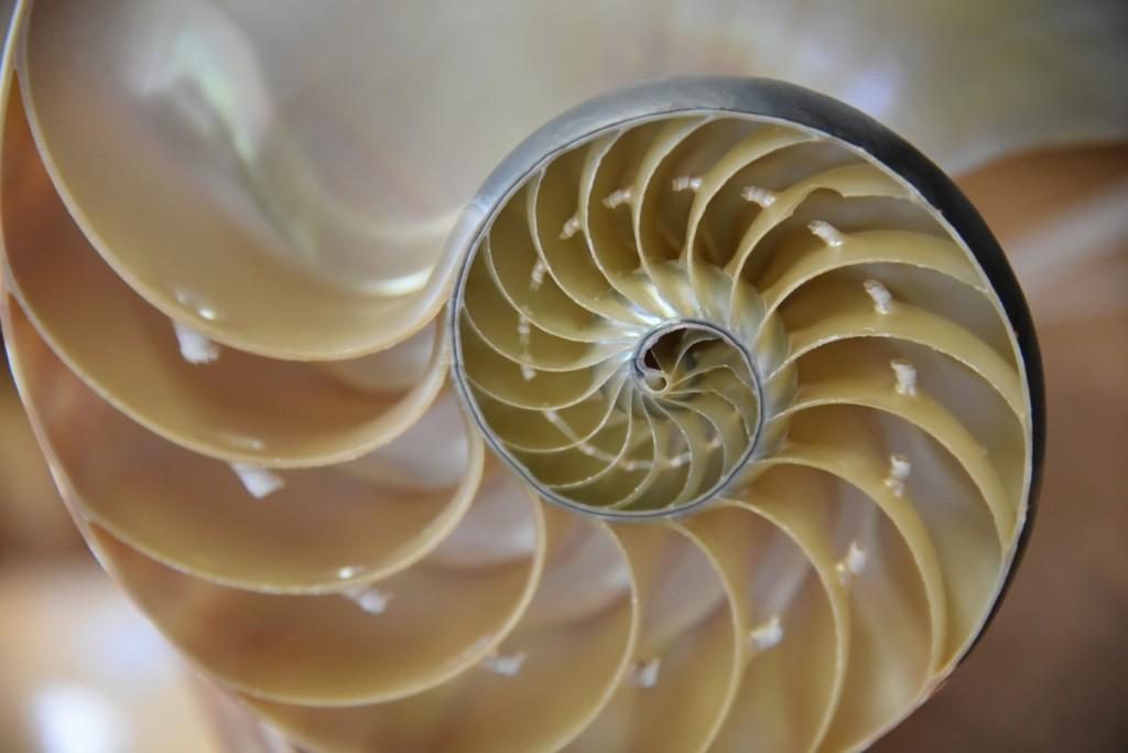 nautilus-cutaway-shell